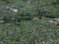 Viesuļvētra. Vēja Odiseja foto 1