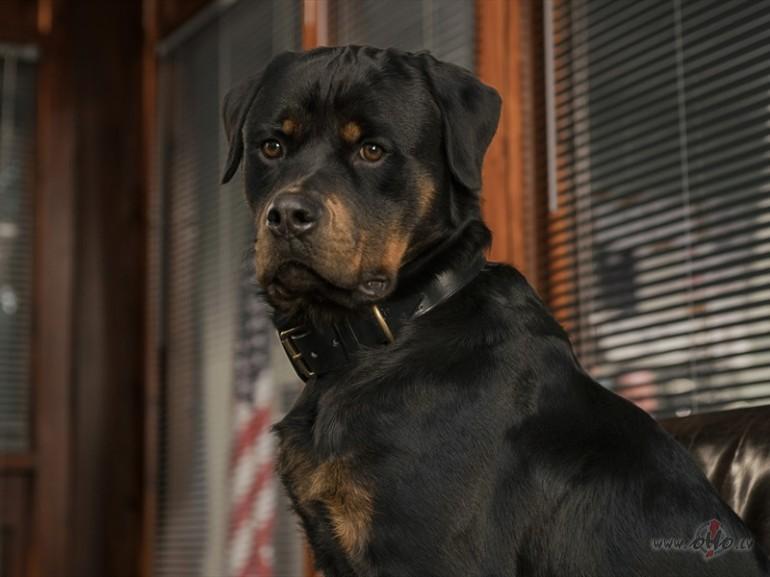 Filmas Suņu neiespējamā misija 1 - foto no filmas