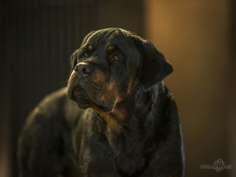 Filmas Suņu neiespējamā misija 3 - kadrs no filmas