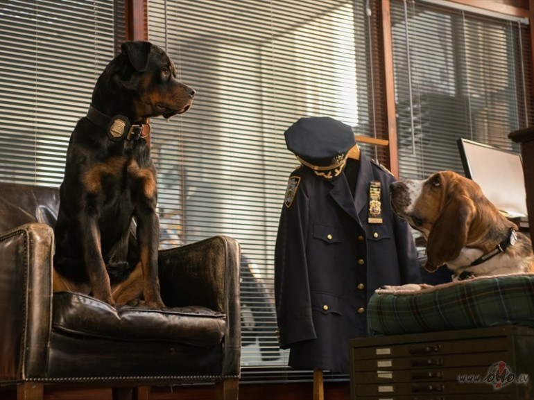 Filmas Suņu neiespējamā misija 4 - attēls no filmas