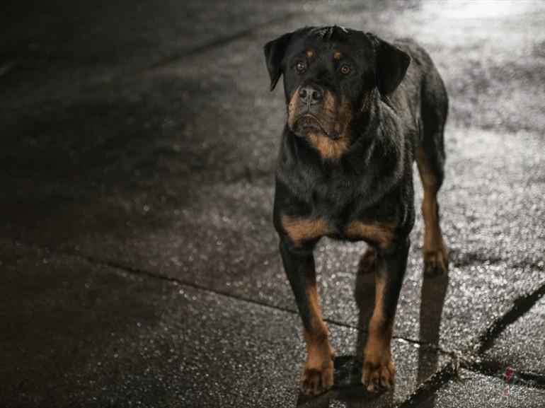 Filmas Suņu neiespējamā misija 5 - fotogrāfija no filmas