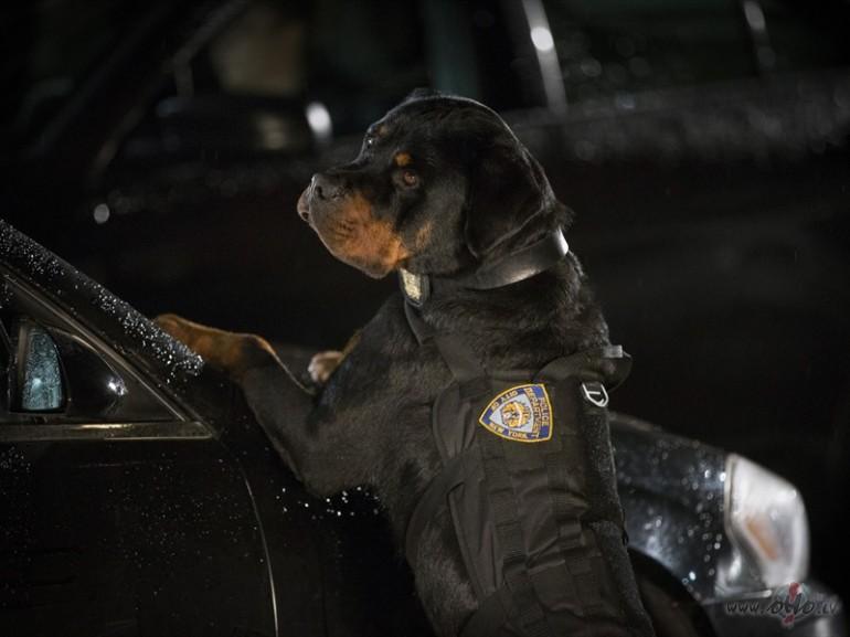Filmas Suņu neiespējamā misija 8 - attēls no filmas