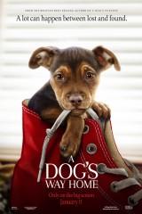Suņa ceļš mājup plakāts