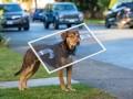 Suņa ceļš mājup foto 7