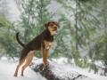 Suņa ceļš mājup foto 9