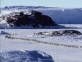 Ceļojošās ciltis 2: Pingvīnu gājiens foto 4