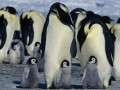 Ceļojošās ciltis 2: Pingvīnu gājiens foto 6