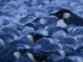 Ceļojošās ciltis 2: Pingvīnu gājiens foto 8