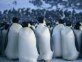 Ceļojošās ciltis 2: Pingvīnu gājiens foto 12