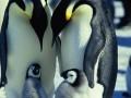 Ceļojošās ciltis 2: Pingvīnu gājiens foto 13