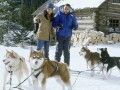 Sniega suņi foto 8