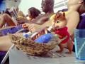 Alvins un burunduki. Aizburājuši foto 4