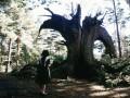 Pāna labirints foto 1