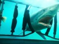 Haizivju nakts foto 8