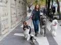 Suņa ceļojums foto 8