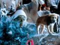 Kā Grinčs nozaga Ziemassvētkus foto 7