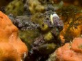 Jūras dzīlēs 3D foto 10